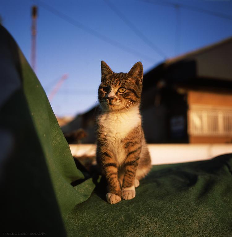 Hassel_Hakatacats_10.jpg