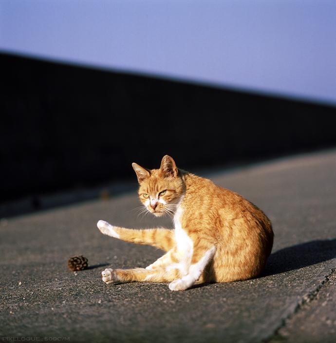 Hasselblad_fhama_cat_06.jpg